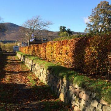 Instant Hedging 2016
