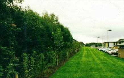 Block Planting of Beech Hedge between Block F and G, Todd campus , Glasgow