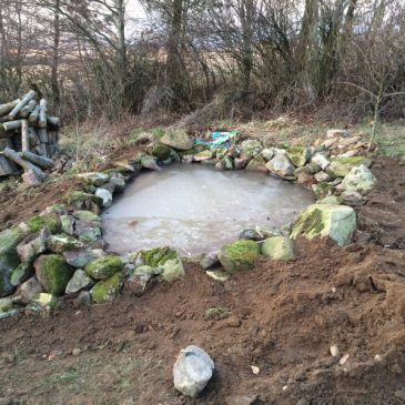 A Garden Pond 2016