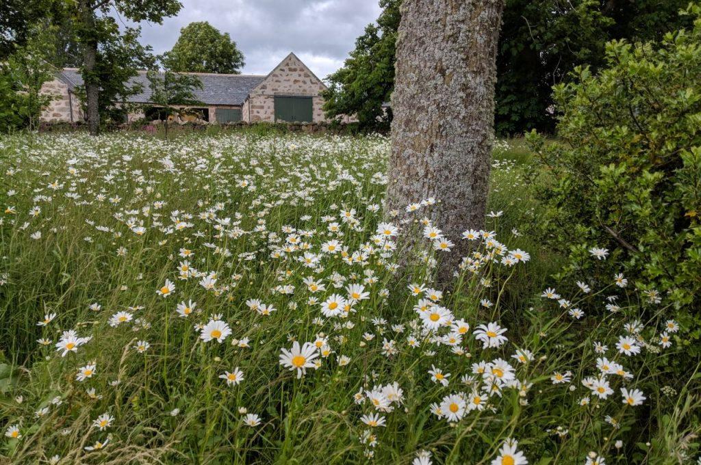 Perennial wildflowers